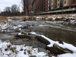 To investigate the near-term effects of road salt on freshwater streams, University of Maryland researchers sampled water from the Paint Branch stream near the UMD campus before, during and after a 2017 snowstorm. Image credit: Kelsey Wood/University of Maryland (Click image to download hi-res version.)