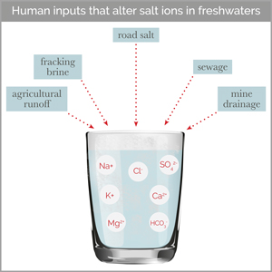 Many different human activities can increase salt pollution in drinking water. Image credit: Cary Institute of Ecosystem Studies (Click image to download hi-res version.)