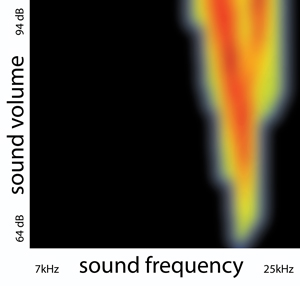 This image shows the selective response of a subplate neuron to sounds of different frequencies (horizontal axis) and volume levels (vertical axis). Warmer colors indicate a stronger response. Subplate neurons are among the first neurons to form in the cerebral cortex and were previously thought to serve a primarily structural role in brain development. A new study suggests that these neurons do, in fact, transmit sensory information. This cell only responded to higher frequencies, especially at low volume levels; increased volume expanded the cell's frequency range of response. Prior to this study, the ability of the cortex to selectively respond to certain sounds was thought to emerge later in brain development. Image credit: Patrick Kanold (Click image to download hi-res version.)