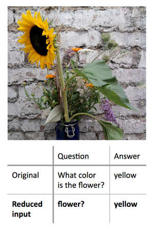 "A new method to decode the decision-making processes used by ""black box"" machine learning algorithms works by finding the minimum input that will still yield a correct answer. In this example, the researchers first presented an algorithm with a photo of a sunflower and asked ""What color is the flower?"" This resulted in the correct answer, ""yellow."" The researchers found that they could get the same correct answer, with a similarly high degree of confidence, by asking the algorithm a single-word question: ""Flower?"" Image credit: Shi Feng/University of Maryland (Click image to download hi-res version.)"